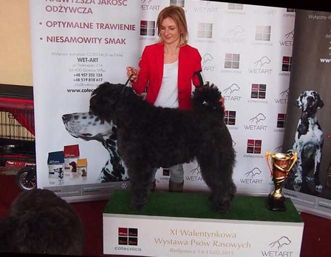 Walentynkowa Wystawa w Bydgoszczy 14-15.02.15 BAGIRA-2XNajlepsza Dorosła Suka,2xCAC :)